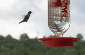 There are big hummingbirds everywhere.