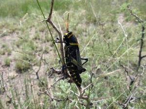 Crazy grasshoppers!