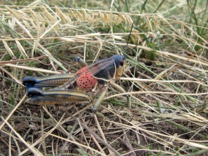 Another awesome grasshopper.