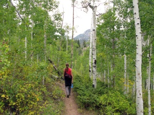 Trekking through the aspen forest.